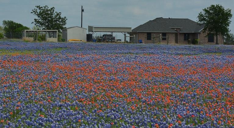 Central Texas Gardener: Wildflower & Native Grass Seeds