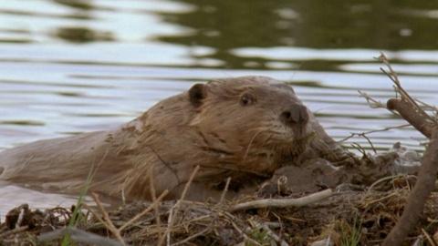 Wild Alaska Live -- Exploring a Beaver Dam