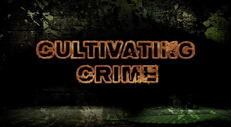 Insight with John Ferrugia: Cultivating Crime