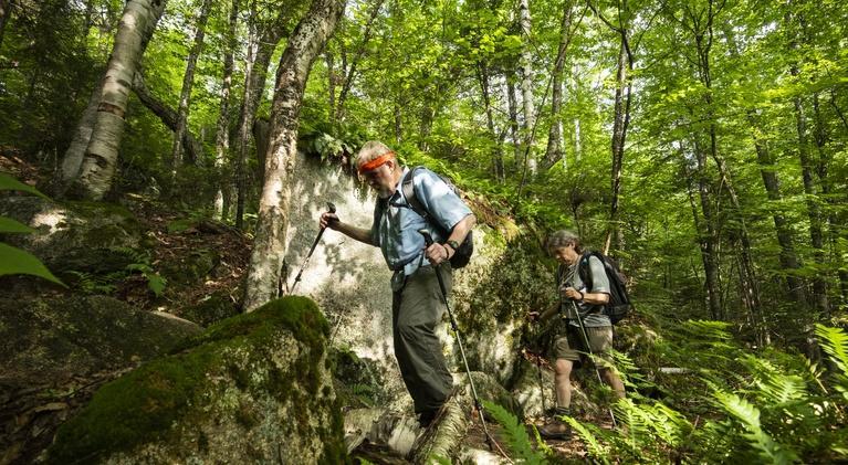 Windows to the Wild: White Mountain National Forest