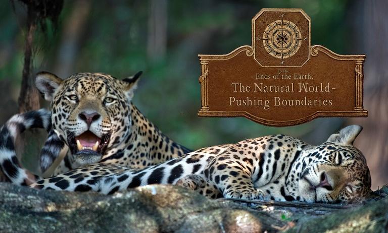 The Natural World - Pushing Boundaries