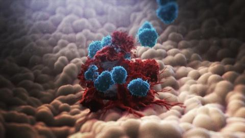 NOVA -- How the Immune System Fights Cancer