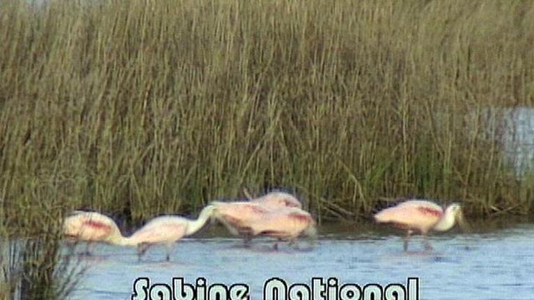 NatureScene: Sabine National Wildlife Refuge
