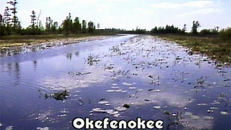 NatureScene: Okefenokee National Wildlife Refuge