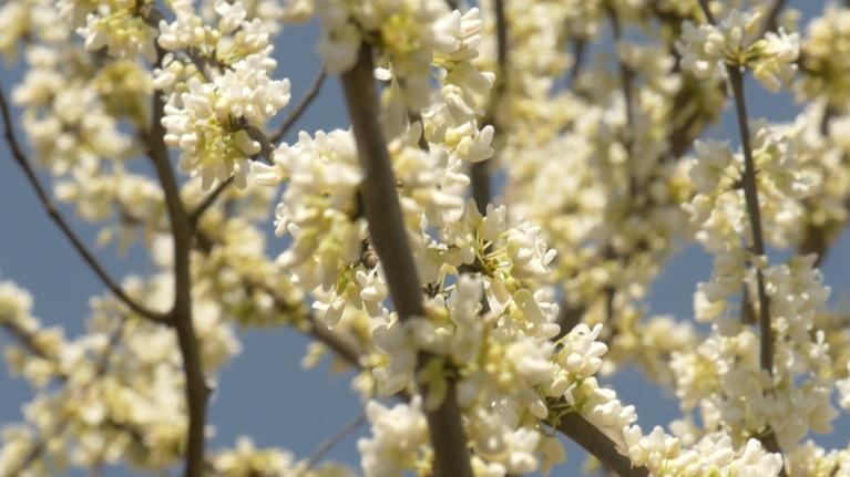 Virginia Currents: Seeking Shade, The Capital Trees Project