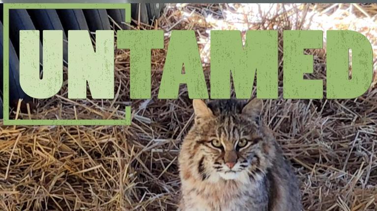 Untamed: Untamed: Unusual Species