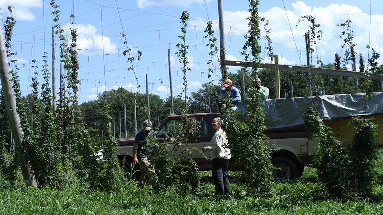 Maryland Farm & Harvest: Episode 511