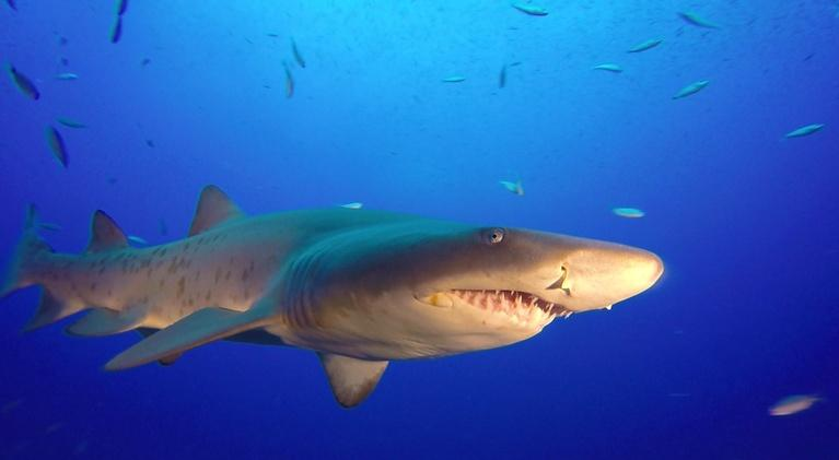 SCI NC: Why scientists want your SHARK pictures
