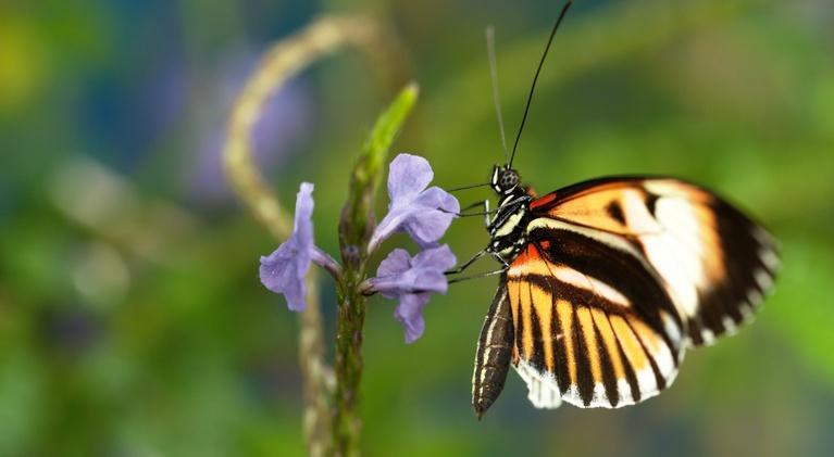 Nature: Sex, Lies and Butterflies
