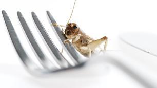 Video thumbnail: NOVA Edible Insects