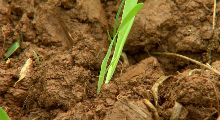 Virginia Home Grown: Virginia Home Grown: Propagate plants, Animal garden beds