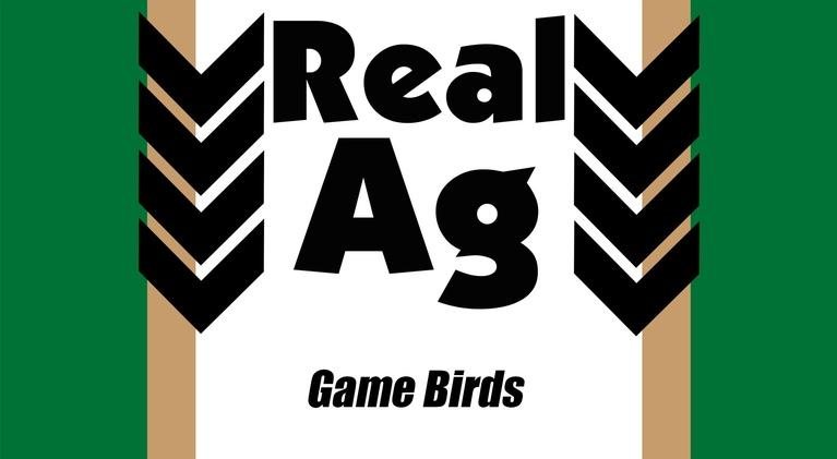 Real Ag: Real Ag  Game Birds Ep704