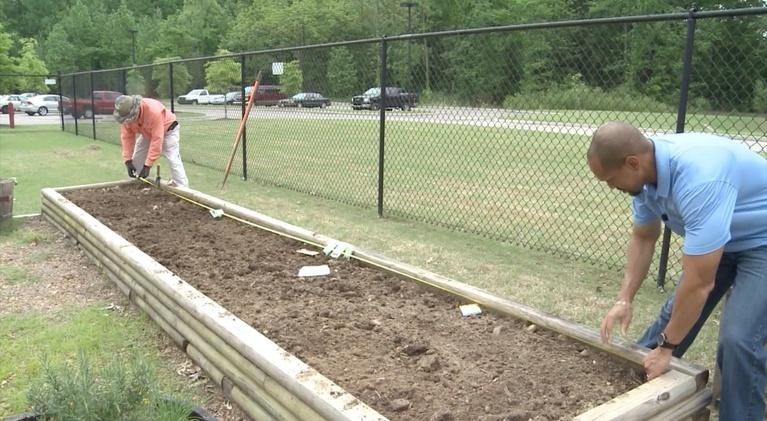 The Family Plot: Planting beans and more, & aerating your lawn