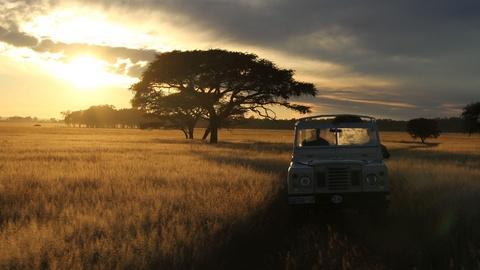 Nature -- The Serengeti Rules