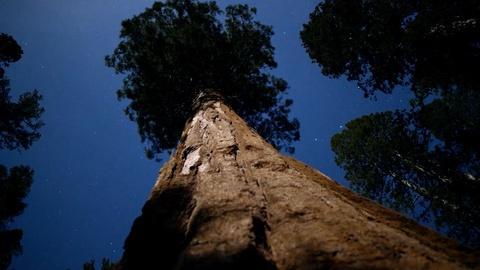 Nature -- Sequoia Fun Facts