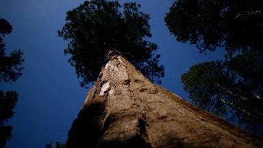 Sequoia Fun Facts