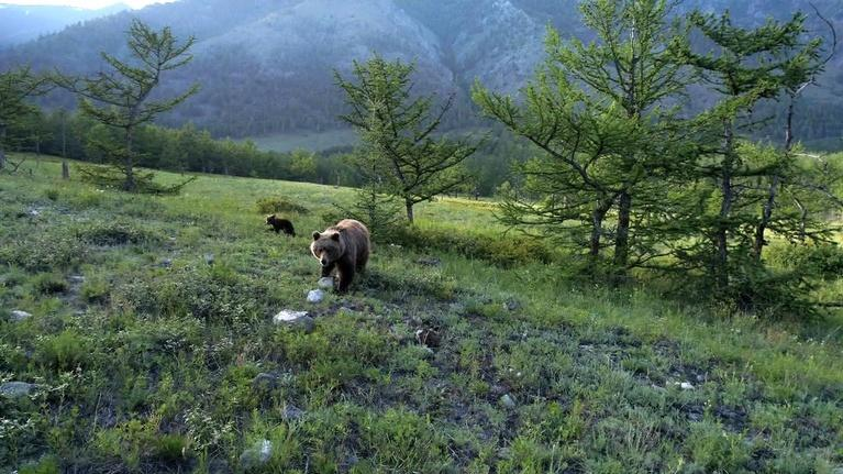 EcoSense for Living: Grizzlies, Wolves, & The Endangered Species Act