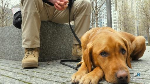 Mission to Remember: Working with Four-Legged Friends