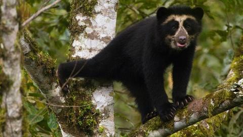Nature -- Meet the Real-Life Paddington Bear