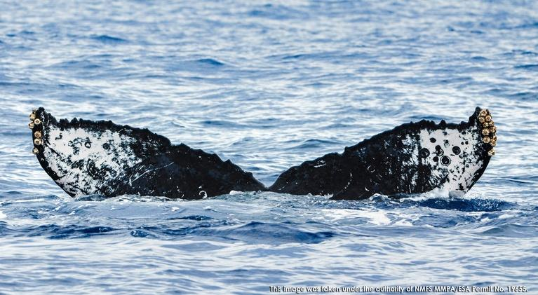 Changing Seas: Mystery of the Humpback Whale Song