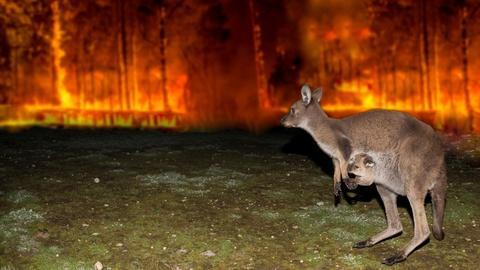 Nature -- Australian Bushfire Rescue
