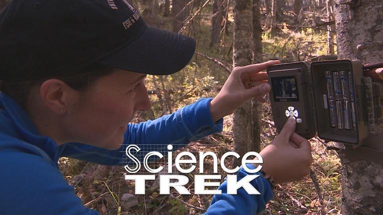 Science Trek: Kingdoms of Life: Sophie Gilbert: Wildlife Biologist