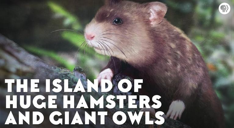 Eons: The Island of Huge Hamsters and Giant Owls