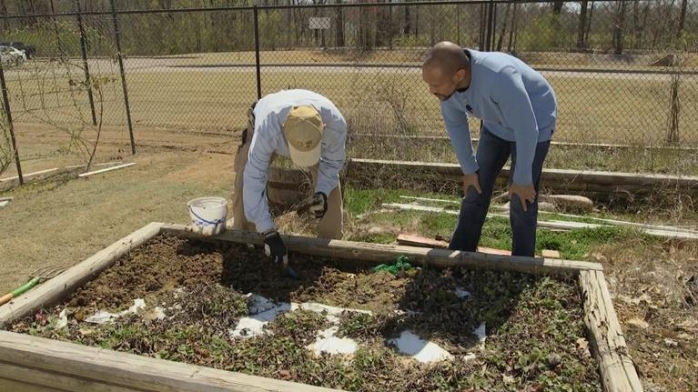 The Family Plot: Planting Strawberries & Annuals