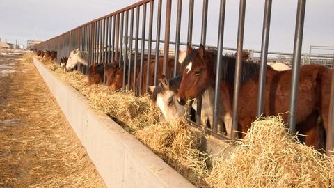 Retro Report on PBS -- Wild Horses vs Ranchers