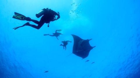 Changing Seas -- Majestic Mantas - Trailer