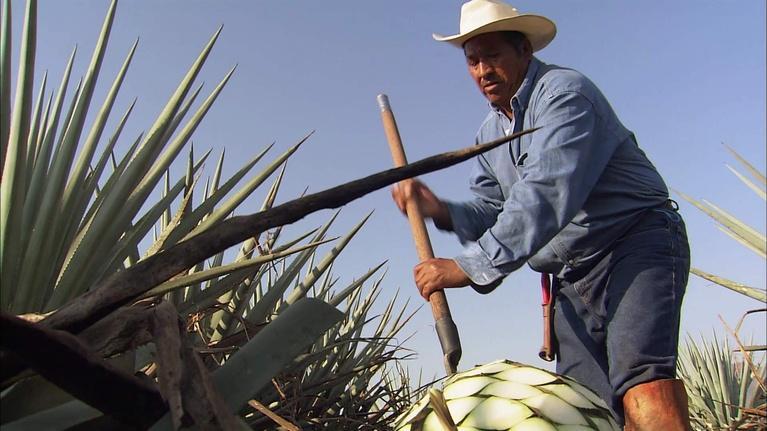 The Desert Speaks: Tequila: Exploring the Legend