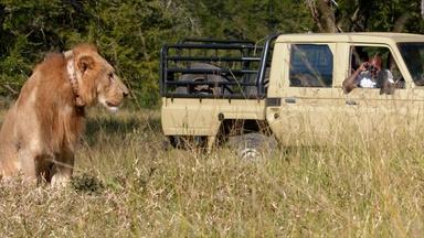 Meet Gorongosa National Park's Head Veterinarian