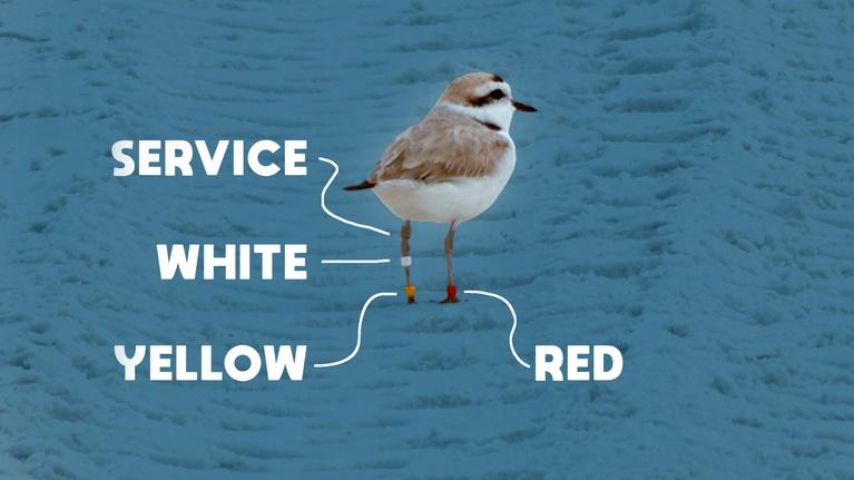 Local Routes: Banding Snowy Plovers at Deer Lake State Park