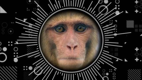 Hacking Your Mind -- What Do People And Monkeys Have In Common?