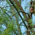 How to Prune a Large Tree