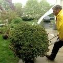 How to Move Shrubs Before Construction