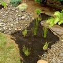 How to Build a Rain Garden