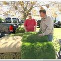How to Lay Sod in a Backyard